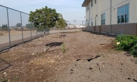 Help the Salk School Garden Grow